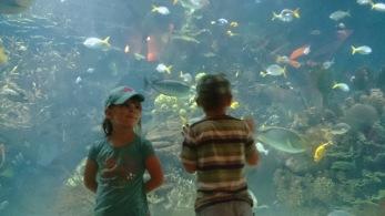 Meeres-Aquarium, Valencia